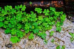 Трава лист на поле цемента Стоковая Фотография RF