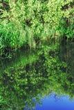 Трава и ветви отраженные в воде Стоковое Изображение