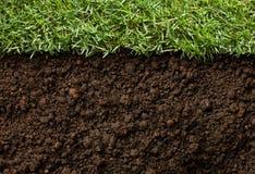 Трава и грязь Стоковое фото RF