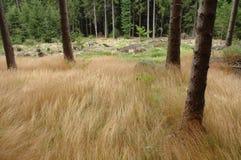 Трава и деревья Стоковые Фото