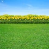 Трава и желтые цветки стоковые фотографии rf
