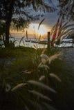 Трава и зарево восхода солнца Стоковое фото RF