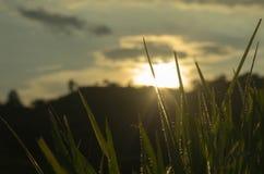 Трава и заход солнца Стоковые Изображения