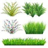 Трава и дикие растения Стоковое фото RF
