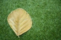 Трава и листья Стоковое фото RF