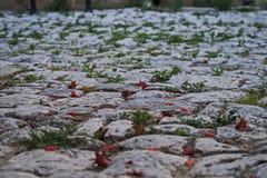 Трава и камень Мощенная булыжником улица в Otranto Стоковая Фотография RF