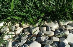 Трава и камень Стоковые Фото