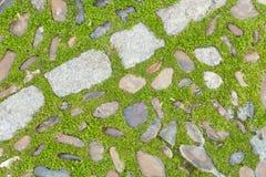 Трава и камни Стоковая Фотография RF