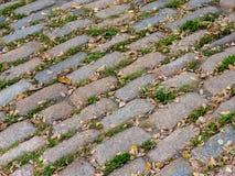 Трава и листья настигая булыжник стоковые фото