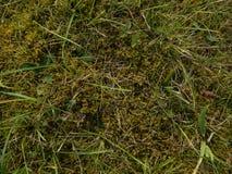 Трава и мох Стоковое фото RF