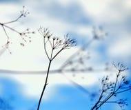 Трава и небо Стоковые Фотографии RF