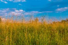 Трава и небо Стоковое Фото