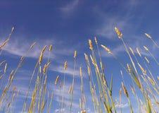 Трава и небо стоковые изображения