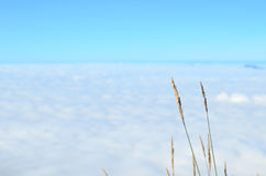 Трава и облака стоковые изображения