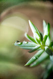 Трава и падения Стоковые Фотографии RF