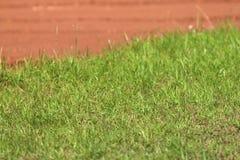 Трава и почва из летнего дня st фокуса солнечного, конца вверх Стоковое фото RF