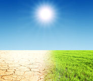 трава и пустыня Стоковые Изображения
