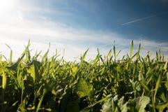 Трава и равнина Стоковые Изображения