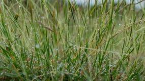 Трава и роса Стоковое Фото
