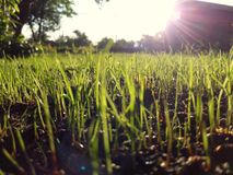 Трава и солнце стоковое фото