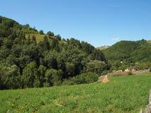 Трава и сосновый лес луга горы Стоковые Изображения