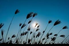Трава и солнечное Стоковая Фотография