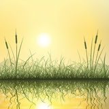 Трава и тростники Стоковое Фото