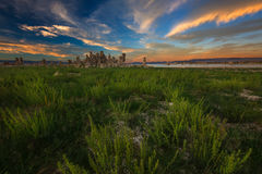 Трава и туфы во время захода солнца Стоковая Фотография