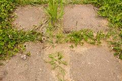 Трава и Anthill на следе плиты цемента в саде Стоковое Фото