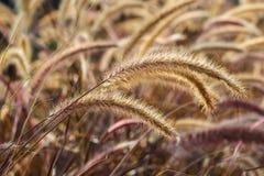 Трава кабеля белки Стоковая Фотография RF