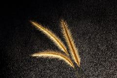 Трава кабеля белки Стоковое Изображение