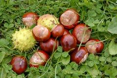трава каштанов Стоковая Фотография RF
