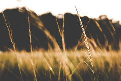 Трава когда заход солнца Стоковое Изображение