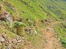 трава корзины Стоковая Фотография RF