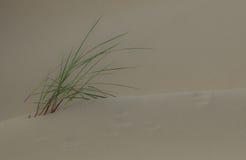 Трава кормила Стоковые Изображения RF