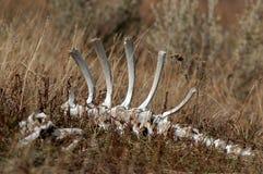 трава косточек Стоковые Изображения RF
