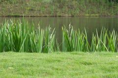 Трава край пруд стоковые фото