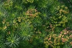 Трава красоты Стоковая Фотография RF