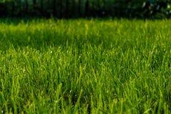 трава кривого предпосылки изолировала белизну взгляда перспективы лужайки Стоковые Фото
