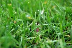 трава крупного плана Стоковое Фото