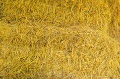 Трава крупного плана сухая Стоковое Изображение RF