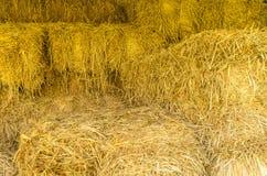 Трава крупного плана сухая Стоковые Фотографии RF