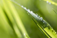трава лезвия Стоковые Изображения RF