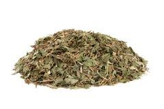 Трава лист барвинка Стоковая Фотография