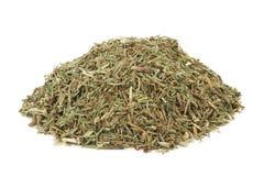 Трава лист Horsetail Стоковое фото RF