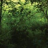 Трава луга в июне, зеленые свежие новые папоротники, кусты, деревья ольшаника Alnus, заводы живой природы, горизонтальный сельски стоковые изображения rf