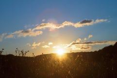 Трава луга в холмистой долине леса в лучах солнца на предпосылке захода солнца Русский ландшафт природы живой природы стоковые изображения rf