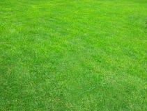 Трава Лужайка Красивая зеленая текстура Стоковое Изображение