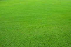 Трава лужайки Стоковая Фотография