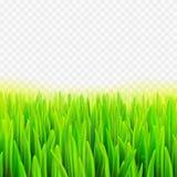 Трава макроса иллюстрации вектора запаса реалистическая Предпосылка лета и весны прозрачная Стоковые Фотографии RF